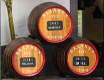 El museo - almacenamiento del vino costoso Madera del vintage Los barriles enormes son marcados por datos del vino Imagenes de archivo