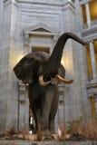 El museo nacional de la historia natural imagen de archivo libre de regalías