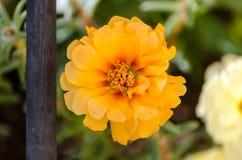 El musgo anaranjado subió imagen de archivo