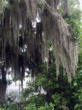 El musgo cubrió el árbol imagen de archivo libre de regalías