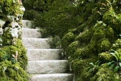 El musgo cubrió las escaleras en el bosque en Portugal Imágenes de archivo libres de regalías