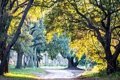 El musgo cubrió a Live Oak sobre el río de Edisto en la bahía Plantat de la botánica imagen de archivo
