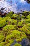 El musgo cubrió los cantos rodados se inclina abajo al agua Imagen de archivo