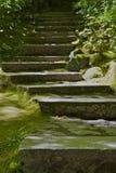 El musgo cubrió los pasos de progresión de piedra Imagen de archivo