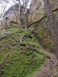 El musgo cubrió piedras y rocas de la piedra arenisca con el roble con la torsión Imagen de archivo