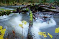 El musgo cubrió registros tiende un puente sobre los rápidos de un río hinchado Foto de archivo libre de regalías