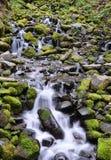 El musgo cubrió rocas Foto de archivo libre de regalías