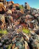 El musgo cubrió rocas Fotos de archivo