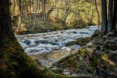 El musgo cubrió rocas en riverbank imágenes de archivo libres de regalías