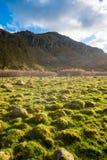 El musgo cubrió rocas en verde de la luz del sol foto de archivo libre de regalías
