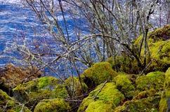 El musgo cubrió rocas, las ramas cubiertas liquen y el mar azul imagenes de archivo