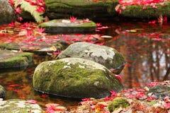 El musgo cubrió piedras Foto de archivo libre de regalías