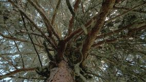 El musgo cuelga de una rama de árbol en el understory del bosque, Georgia almacen de video