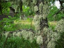 El musgo en el árbol Imagen de archivo