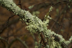 El musgo en la rama Fotos de archivo