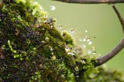 El musgo está en el árbol Imagen de archivo
