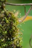 El musgo está en el árbol Foto de archivo