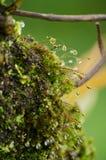 El musgo está en el árbol Fotos de archivo
