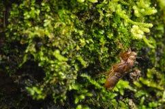 El musgo está en el árbol Foto de archivo libre de regalías