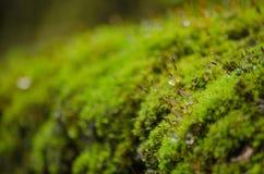 El musgo está en el árbol Imagen de archivo libre de regalías