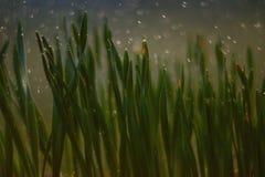 El musgo macro empaña maravillosamente Fotografía de archivo libre de regalías
