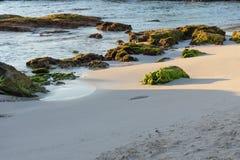 El musgo verde cubrió rocas del arrecife de coral en una playa arenosa Maya de Riviera, Cancun, México Imágenes de archivo libres de regalías