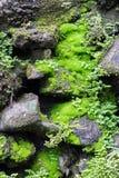 El musgo verde mojado en rocas oscuras fotos de archivo libres de regalías