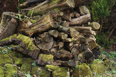 El musgo y el liquen en una descomposición abren una sesión un jardín de la fauna Imagenes de archivo