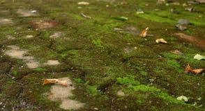 El musgo y seca las hojas en el camino del ladrillo Fotos de archivo