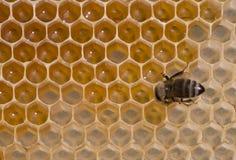 El néctar de la abeja vertió en la célula Fotografía de archivo