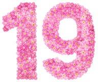 El número árabe 19, diecinueve, de nomeolvides rosada florece, es stock de ilustración