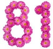 El número árabe 81, ochenta uno, de las flores del crisantemo, es Fotografía de archivo libre de regalías