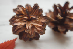 El número de conos se cierra para arriba Imagen de archivo libre de regalías