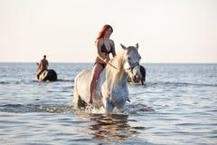 El nadar con el caballo Imagen de archivo libre de regalías