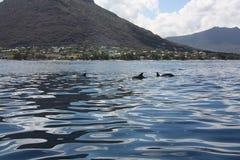 El nadar con los delfínes Foto de archivo libre de regalías