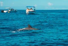 El nadar con los delfínes en Le Morne Mauritius imagen de archivo
