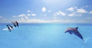 El nadar de los delfínes, saltando en la nube azul del océano, fondo marino de la fauna fotos de archivo libres de regalías