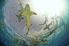 El nadar en el Sun Imagen de archivo libre de regalías