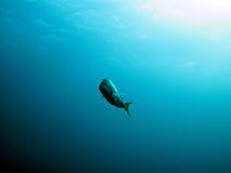El nadar a solas fotografía de archivo libre de regalías
