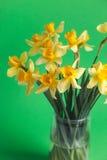 El narciso o el narciso amarillo florece en fondo verde Foco selectivo Lugar para el texto Imagen de archivo libre de regalías