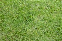 El natural de la hierba verde en fondo Fotografía de archivo