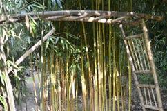 El negocio de bambú es asombroso y potente fotografía de archivo