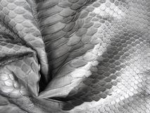 El negro escaló la piel de Python, se ennegrece para la textura fotografía de archivo libre de regalías