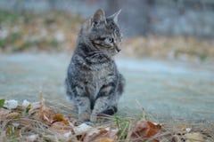El negro gris coloreó el gato en el hormigón de la yarda Fotografía de archivo libre de regalías
