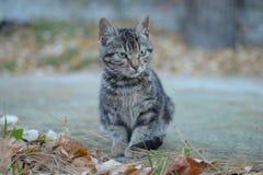 El negro gris coloreó el gato en la parte concreta de la yarda Imagenes de archivo