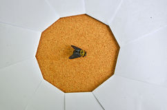 El negro manosea la abeja en foco del obturador de papel Imagen de archivo