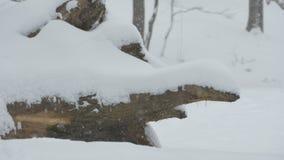 El nevar en árbol caido almacen de video
