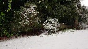 El nevar en Roundhay Leeds almacen de metraje de vídeo