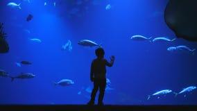 El niño aprende el mundo, silueta de un incide de observación del niño del acuario enorme por completo de pescados exóticos en oc almacen de metraje de vídeo