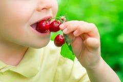 El niño come cerezas Alimento sano Frutas en el jard?n Vitaminas para los ni?os Naturaleza y cosecha foto de archivo libre de regalías